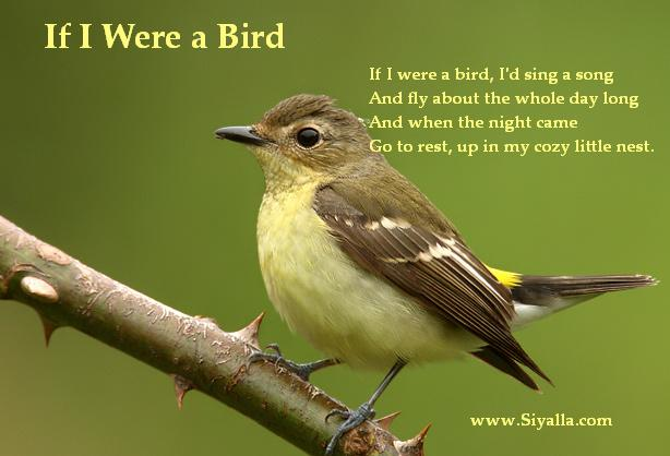 If i were a bird essay